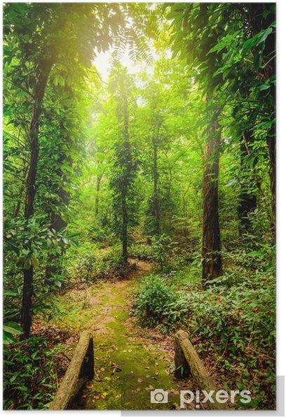 Poster Die Schönheit der tropischen Wälder. tropische botanische Vielfalt und hohe Feuchtigkeit. - Landschaften