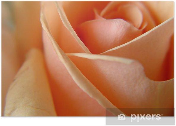 Poster Ein einziger Pfirsich Rose Makro - Internationale Feste
