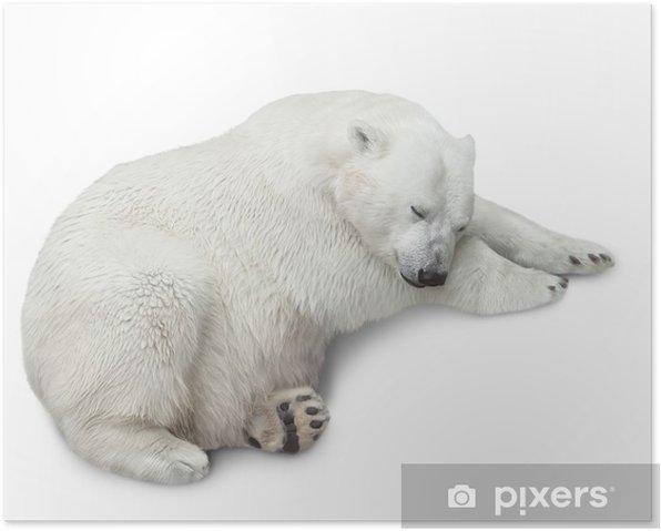 Poster Ein Eisbär - Säugetiere