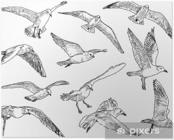 Poster Ein Schwarm Möwen - Vögel