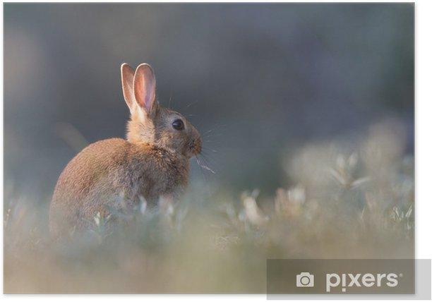 Poster Ein wildes Kaninchen Beweidung in den dunnes - Kaninchen