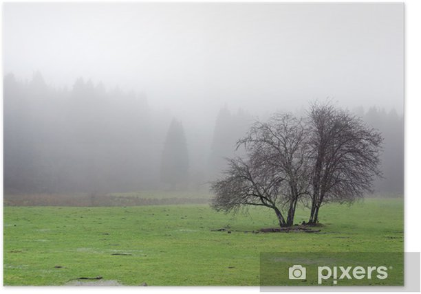 Poster Einsamer Baum mit Nebel - Land