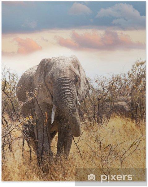 Poster Elefant - Säugetiere
