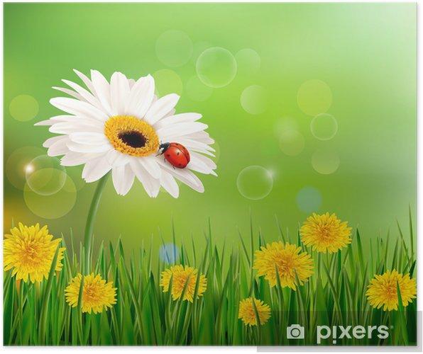 Poster Estate Sfondo Della Natura Con Coccinella Sul Fiore Bianco