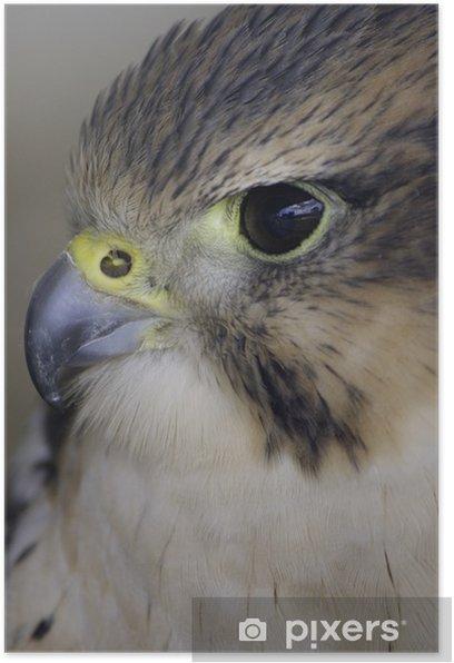Poster Falken lanner - Vögel
