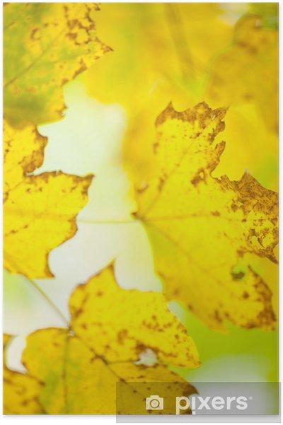 Poster Fall Foliage - Stagioni
