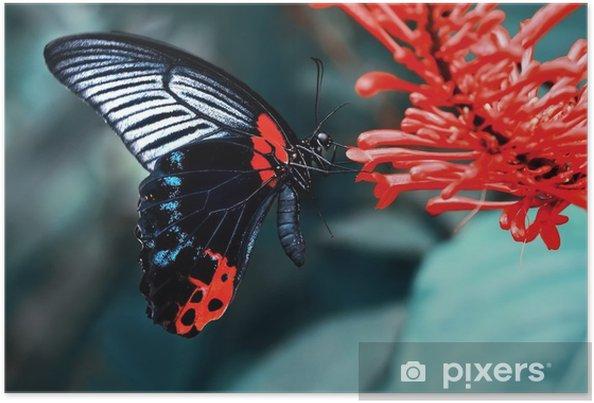 Poster Farfalla - Animali