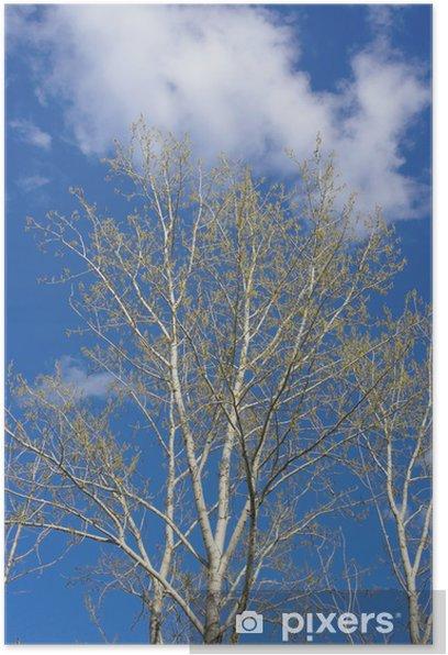 Poster Feder Pappel - Bäume