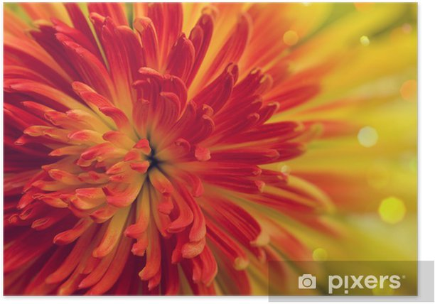 Poster Fiore arancione-rosso - Fiori