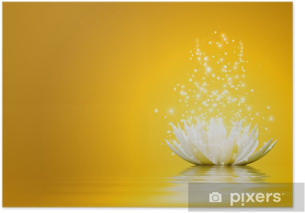 Poster Fiore di loto - Sfondi