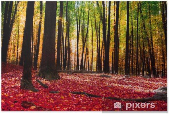 Poster Foresta in autunno con luce dorata - Temi