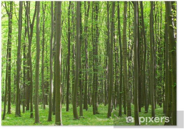 Poster Forst - Pflanzen