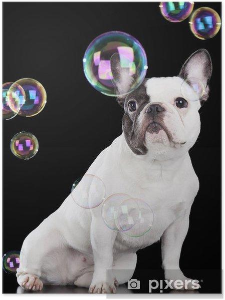 Poster Französische bulldogge - Französische Bulldogge