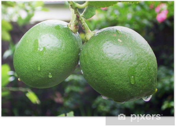 Poster Fresh Green Lime - Bäume