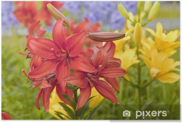 Poster Garten Lilien Pixers Wir Leben Um Zu Verändern