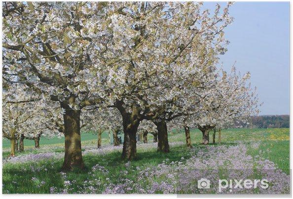 Poster giardino dei ciliegi in piena fioritura u2022 pixers® viviamo