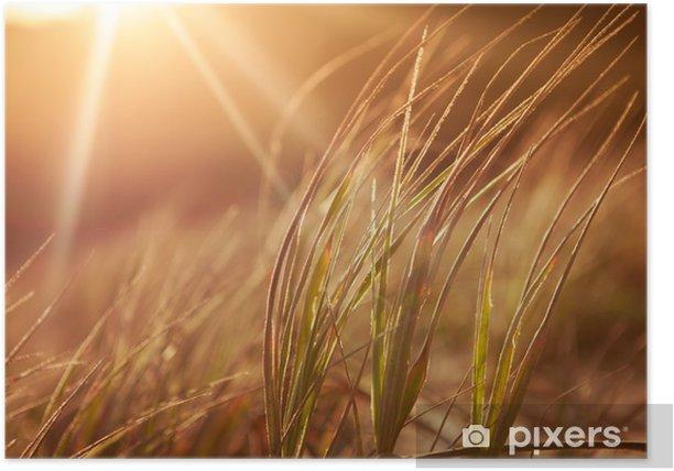 Poster Golden Grass - Vorlagen