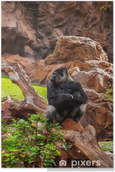 bbe9dd6481b8d Poster Gorilla-Affen im Park in Teneriffa Kanaren • Pixers® - Wir ...