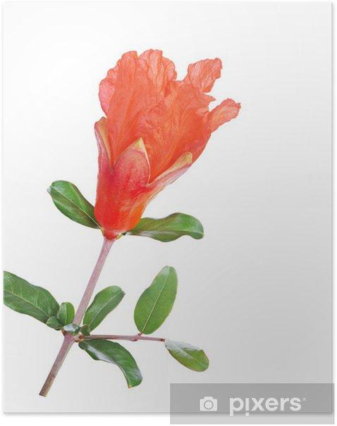 Poster Granatapfel Blume - Blumen
