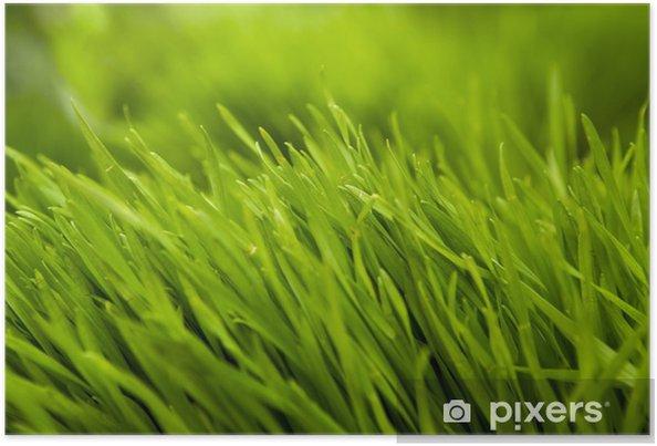 Poster Gras - Bereich
