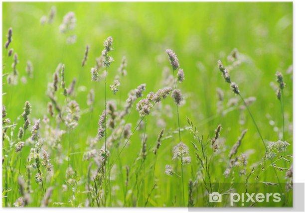 Poster Green grass - Jahreszeiten