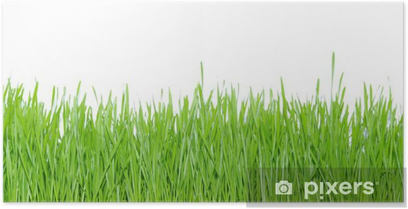 Poster Green grass - Pflanzen