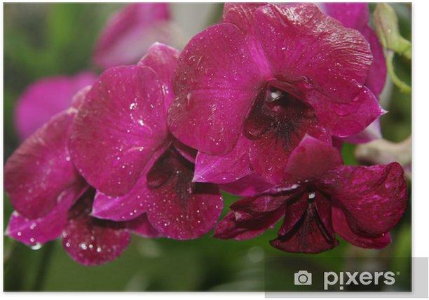 Poster Große rote Orchidee - Blumen
