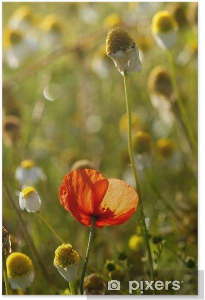 Poster Grüne poppie und Kamille Felder - Jahreszeiten