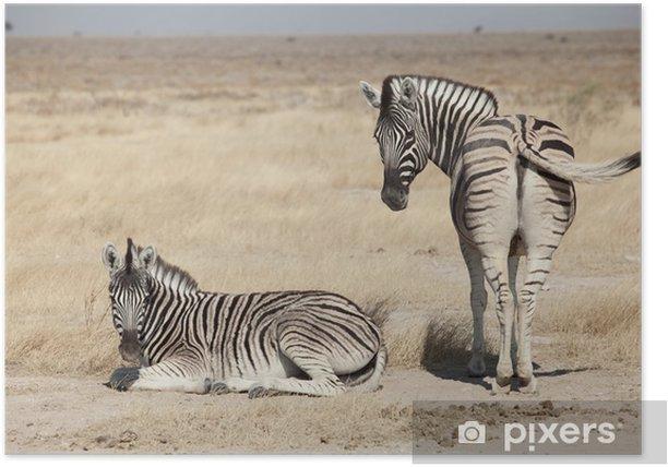 Poster Gruppe von Zebra - Themen
