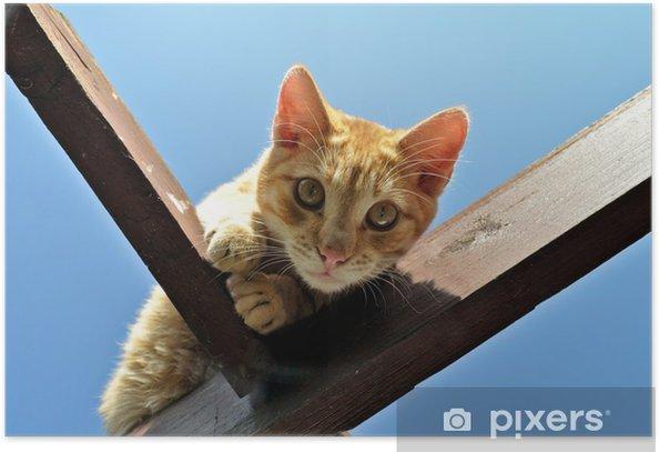 Poster Hauskatze - Säugetiere