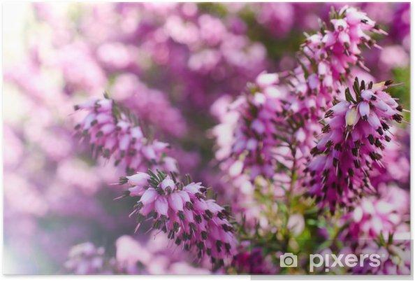 Poster Heather Blumen Blühen März Pixers Wir Leben Um Zu Verändern