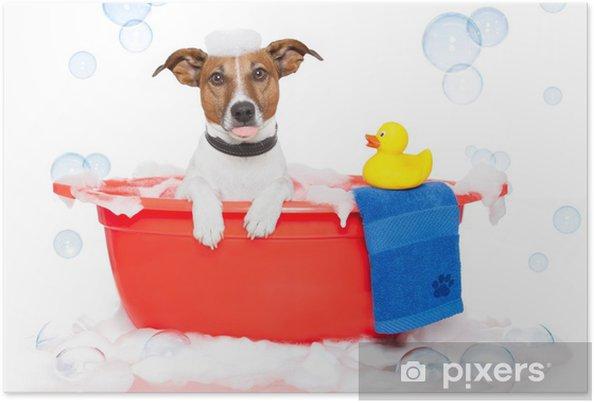 Poster Hund Ein Bad In Einer Badewanne Mit Bunten Plastikente