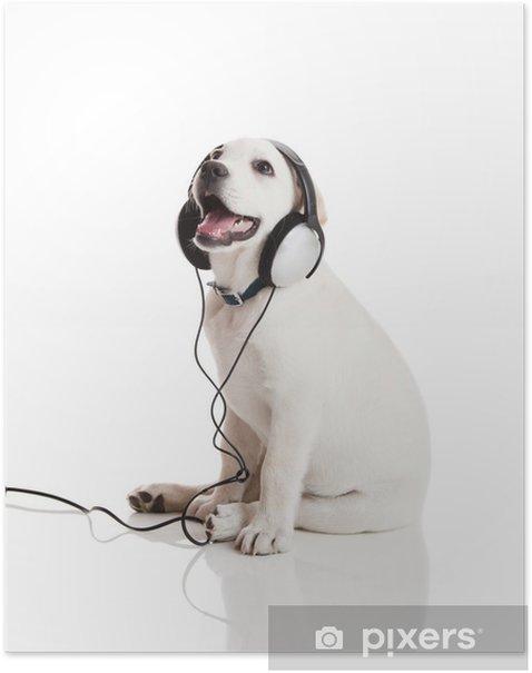 Poster Hund Musikhören - Themen