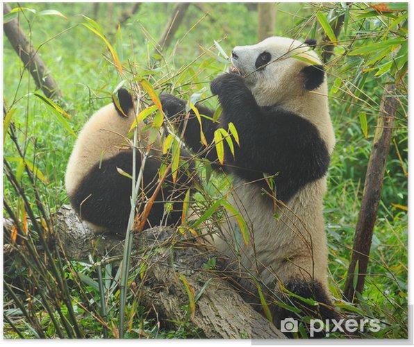 Poster Hungry Giant Panda Bear Essen Bambus Pixers Wir Leben