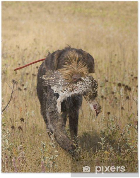 Poster Jagd-Hund mit Grouse - Säugetiere