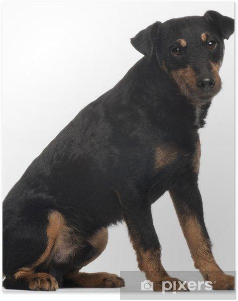 Poster Jagdterrier oder Deutsch-Jagd-Terrier, 4 Jahre alt, sitzt - Säugetiere