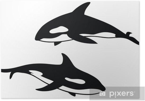 Poster Killer whale - Wandtattoo