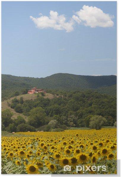 Poster Landschaft zwischen Lazio und Umbrien (Italien) mit Sonnenblumen - Land