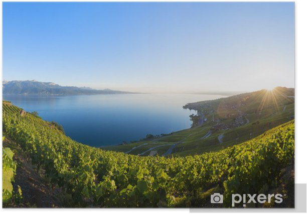 Poster Lavaux Panorama - Europa