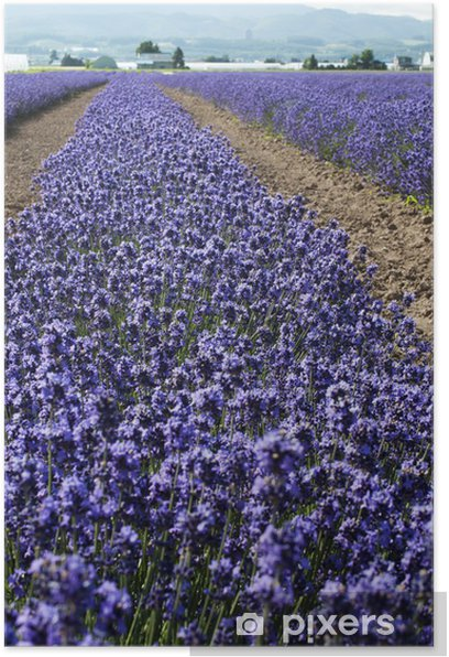 Poster Lavendel - Themen