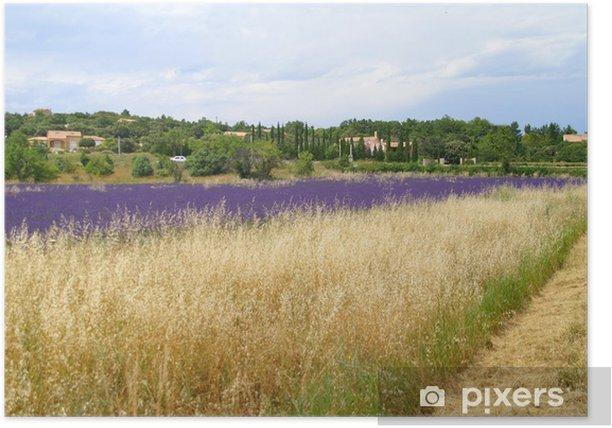 Poster Lavendelfelder - Landwirtschaft