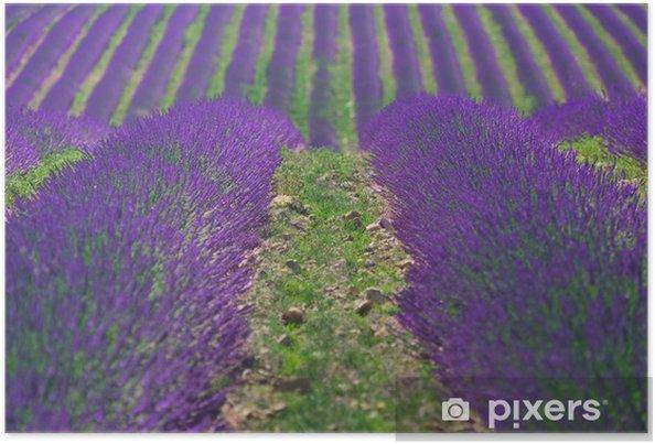 Poster Lavender # 4 - Stagioni