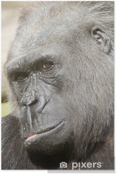 7e5bfc2375db9 Poster Leiter Schuss von männlichen Gorilla - Hochformat • Pixers ...
