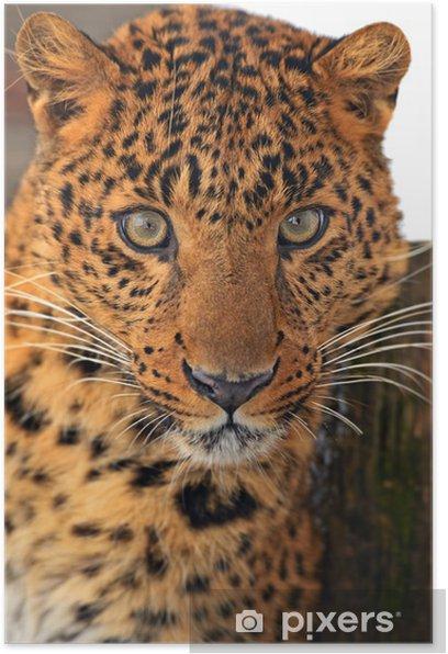 Poster Leopard - Säugetiere