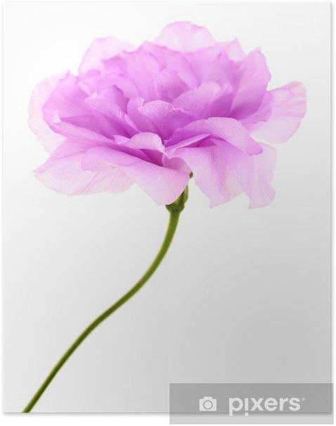 Poster Lila künstliche eustoma isoliert auf weiß - Blumen