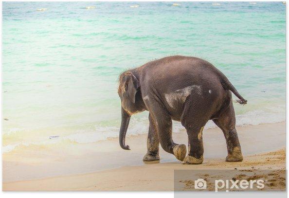 Poster Little baby elefante bagna 1 - Temi