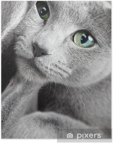 Poster Lustige cay - Themen