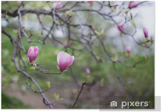 Poster Magnolienbaum - Jahreszeiten