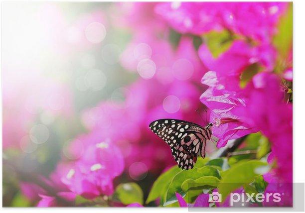 Poster Majestätisch Morgen Szene mit Schmetterling Fütterung auf Nektar einer bou - Themen