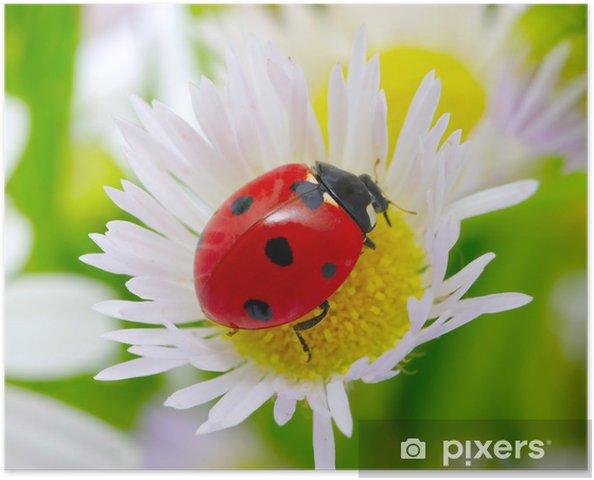 Poster Marienkäfer Auf Einer Blume Pixers Wir Leben Um Zu